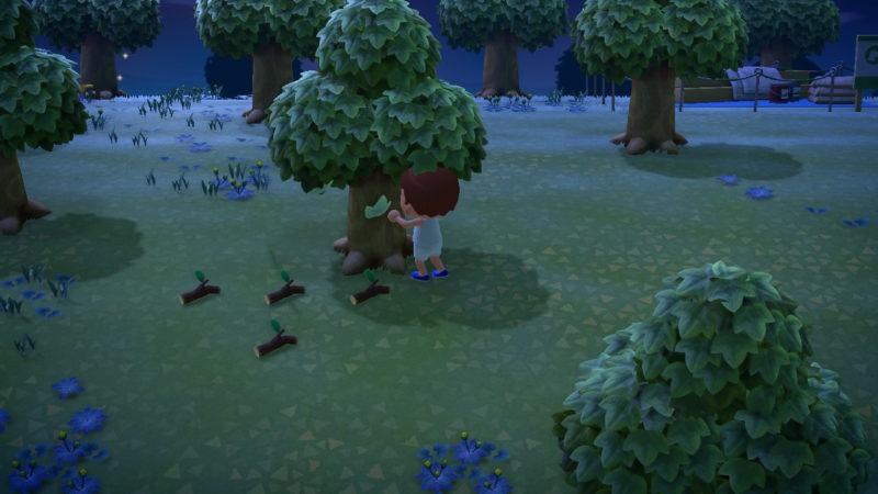 木を揺する少年