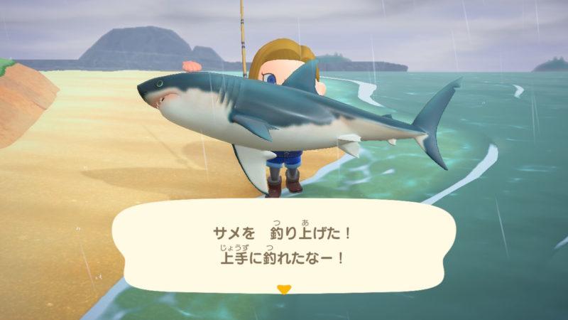 サメを釣り上げた人