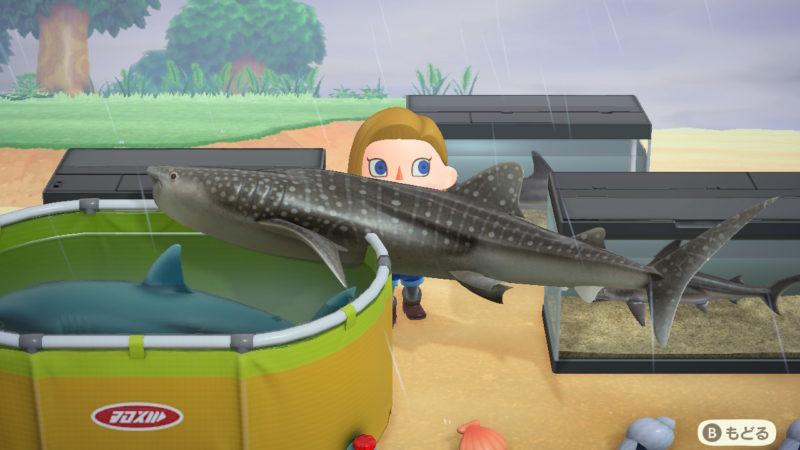 大量のサメ