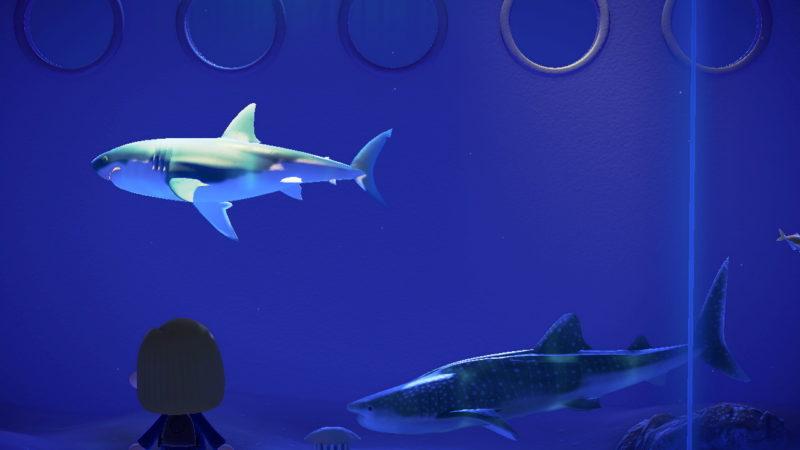 博物館のサメ