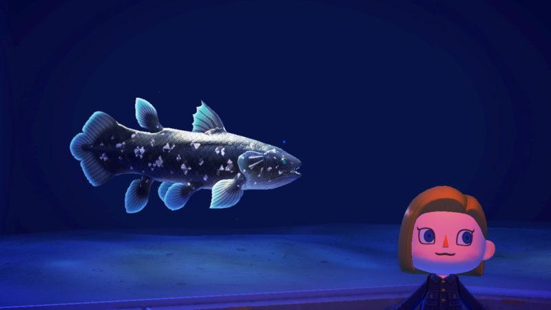 あつまれ どうぶつ の 森 魚 レア
